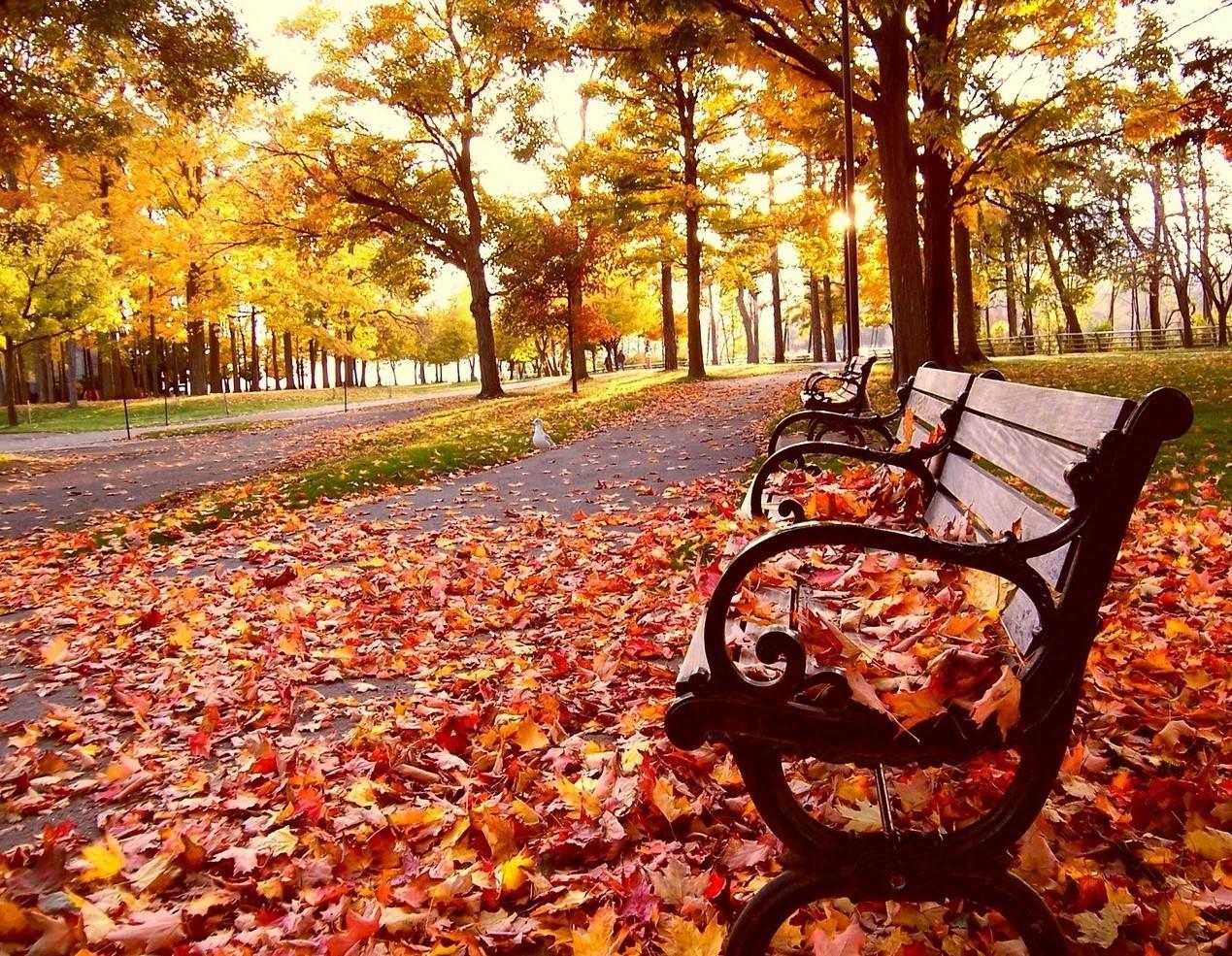 عکس عاشقانه پاییزی