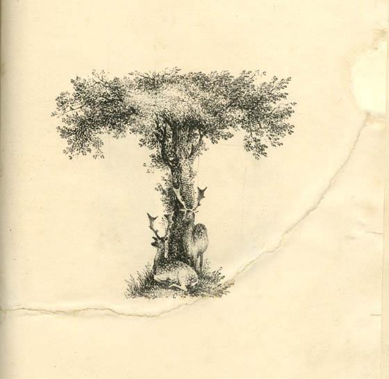 عکس حرف t انگلیسی نقاشی